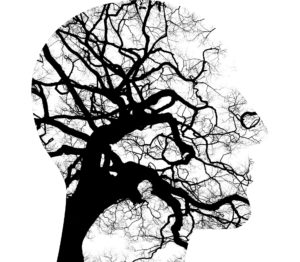 image of mind as a tree to show counsellors